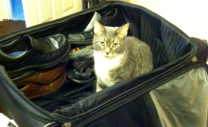 """Mouse"" trying to sneak in Pat's luggage."